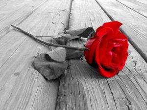 love-is-blind-21645579